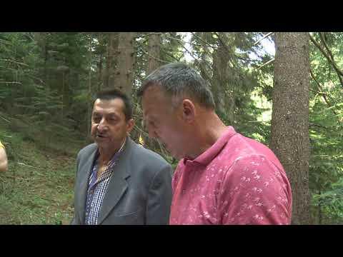 Otimanje sume / Selo Jelasca / Kalinovik (BN TV 2019) HD