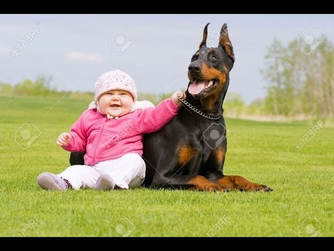 Doberman Dog Gives Baby Hugs and Laughs - Doberman Plays With Baby Compilation 2016 - Dog love Baby