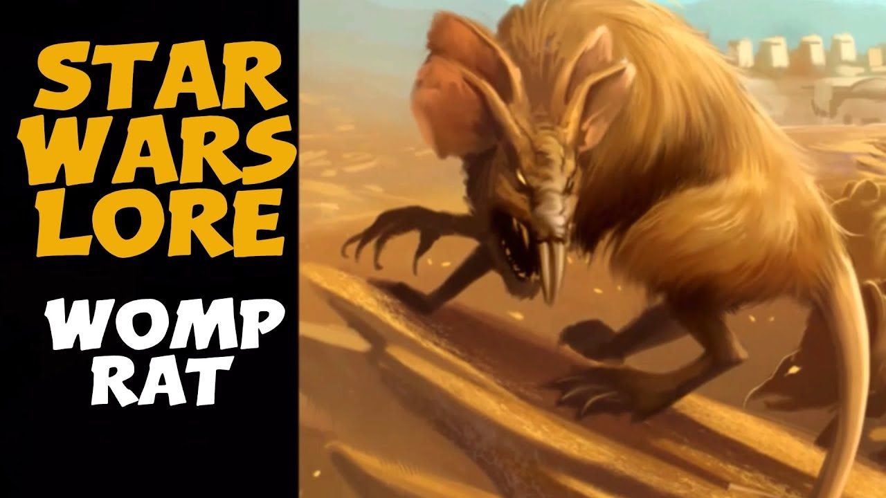 The Womp Rat Native To Tatooine And A Pest Star Wars Animals Youtube They're not much bigger than two meters.. the womp rat native to tatooine and a pest star wars animals