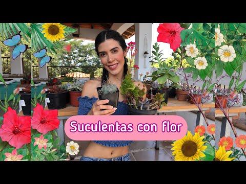 Top 10 suculentas flor #mitopflor