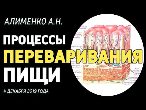 Процессы переваривания пищи. Алименко А.Н. (04.12.2019)