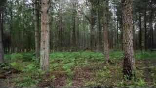 Hollands Wood - Brockenhurst - The New Forest Woodland