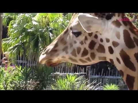 Dünyanın En Tatlı Hapşıran 18 Hayvan