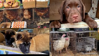 Рынок животных/Птичий рынок/Собачий рынок/Кошачий рынок/Староконный рынок в Одессе