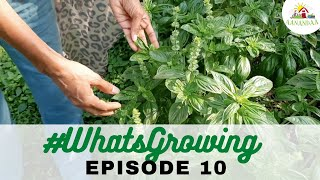 EP 10 | #WhatsGrowing in our Veggie Garden [19.10.2020]