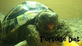Mediterranean Tortoise Diet - Hermann