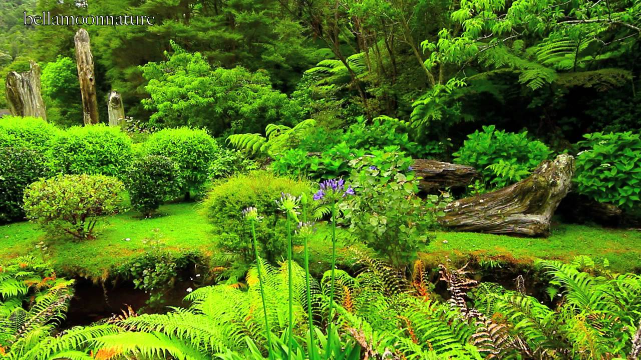 Beautiful Gardens New Zealand Youtube - beautiful gardens images