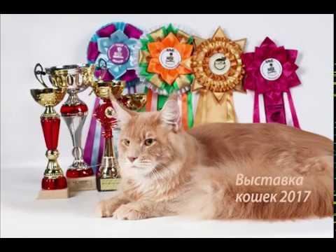Объявления о продаже взрослых кошек и котят в москве: шотландские, вислоухие, британские, бенгальские, персидские коты, мейн-куны по доступным ценам. Купите породистого котенка недорого на юле.