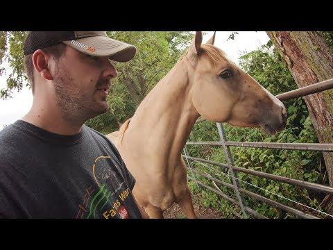 C̶a̶t̶t̶l̶e HORSE Damage