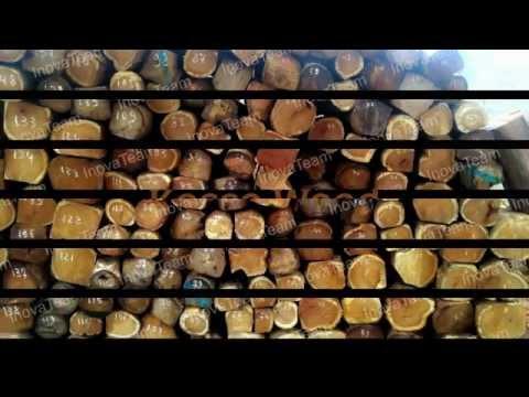 Teak Wood -- InovaTeam SARL - Exporters of various commodities