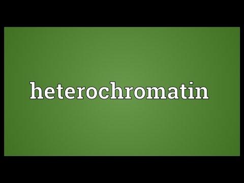 Heterochromatin Meaning