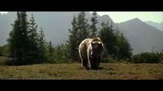 Медведь/  The Bear  / L