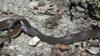 sex videos of snake