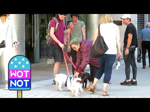 Lady Gaga Stops to Pet a Dog in Vancouver, Canada