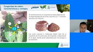 CURSO EN LÍNEA: Manejo Integral del Aguacate | Colaboración con Greenhow y Adama