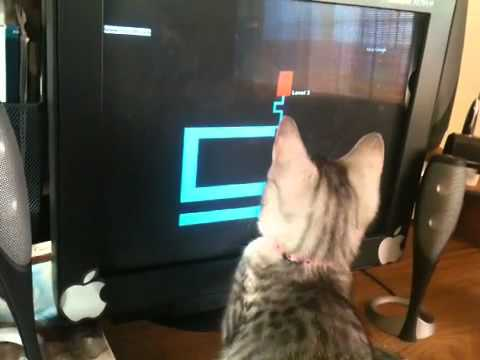 Cat Watching Scary Maze Game