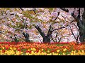 Beautiful Relaxing, Peaceful Calm Soothing Instrumental,