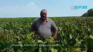 Днепропетровский клан: уничтожение посевов с дельтаплана