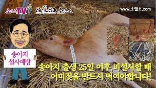 [소앤소TV-김재경원장] 송아지 출생 25일 이후, 피…
