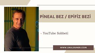 Pineal bez yada Epifiz salgı bezi