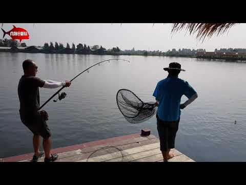 Thailand Fishing - New Bungsamran Fishing Park 2019