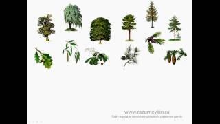 видео лиственные деревья