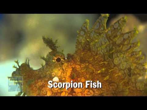 Sargussum And Scorpion Fish At The New York Aquarium