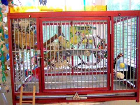 Quot Pimp My Cage Quot Awesome Cage And Playground Set Up For 1