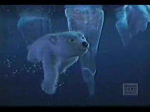 pub coca cola ours polaire