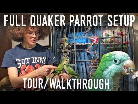 QUAKER PARROT CAGE TOUR! Full Enclosure Walkthrough For Small Parrots