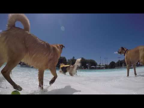 Tails on the Trails Dog Swim 2016