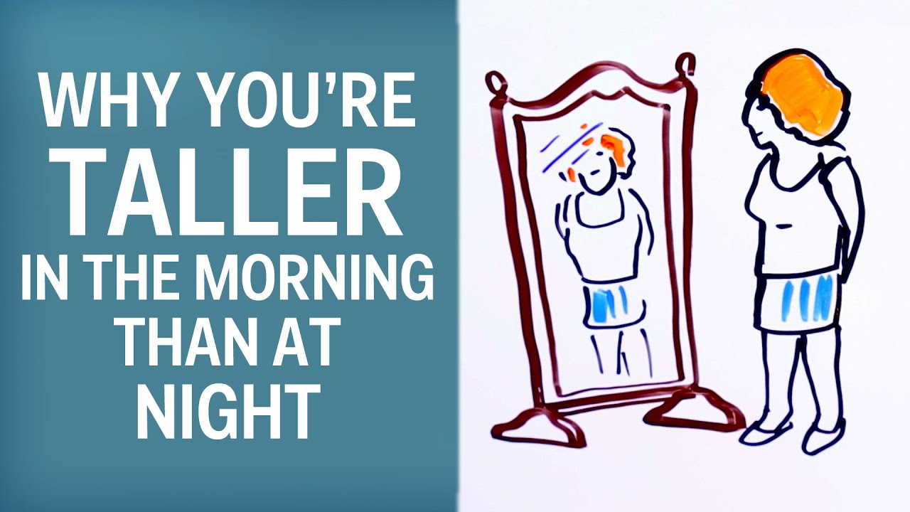 Why Youre Taller In The Morning Than At Night Youtube