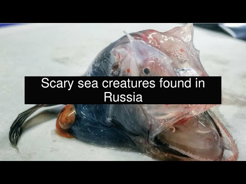 Scary sea creatures found in Russia