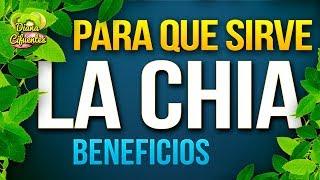 Para Que Sirve La Chia - Propiedades, Beneficios Y Contraindicaciones De La Chia
