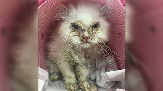 Das Tierheim rät der Frau, die Katze einschläfern zu lassen