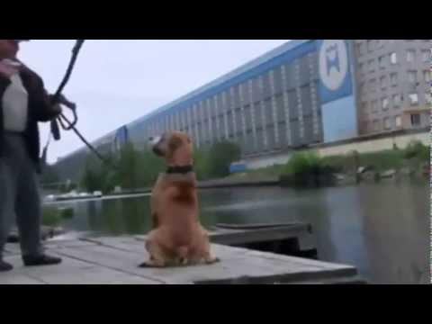 Видео: Падение с велика и ещ