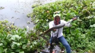 Mancing Mania - Dina Angler dapet ikan super