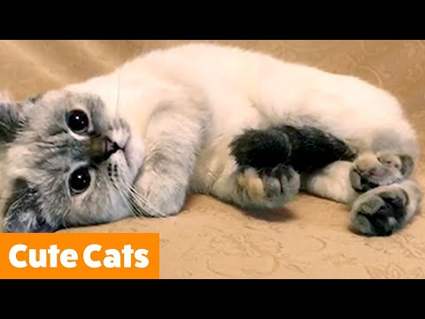 Cutest Cat Bloopers | Funny Pet Videos
