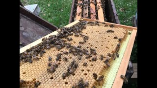 Improve Hive Health With Beetle Buster Baseboard