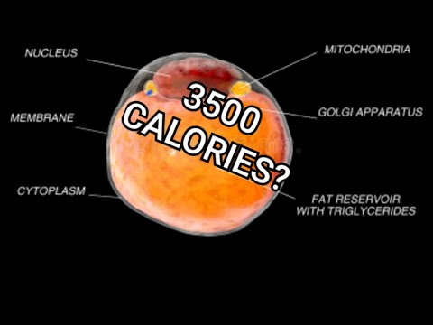 3500 Calories in a Pound of Body Fat. Yes and NO