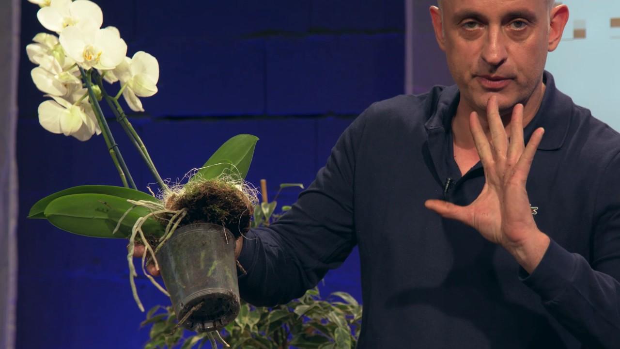 Epingle Par Alexandra Vh Sur Jardin En 2020 Orchidee Vases