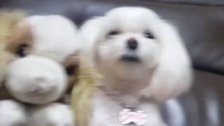 개귀욤 누가 우리 강아쥐일까요?ㅋ