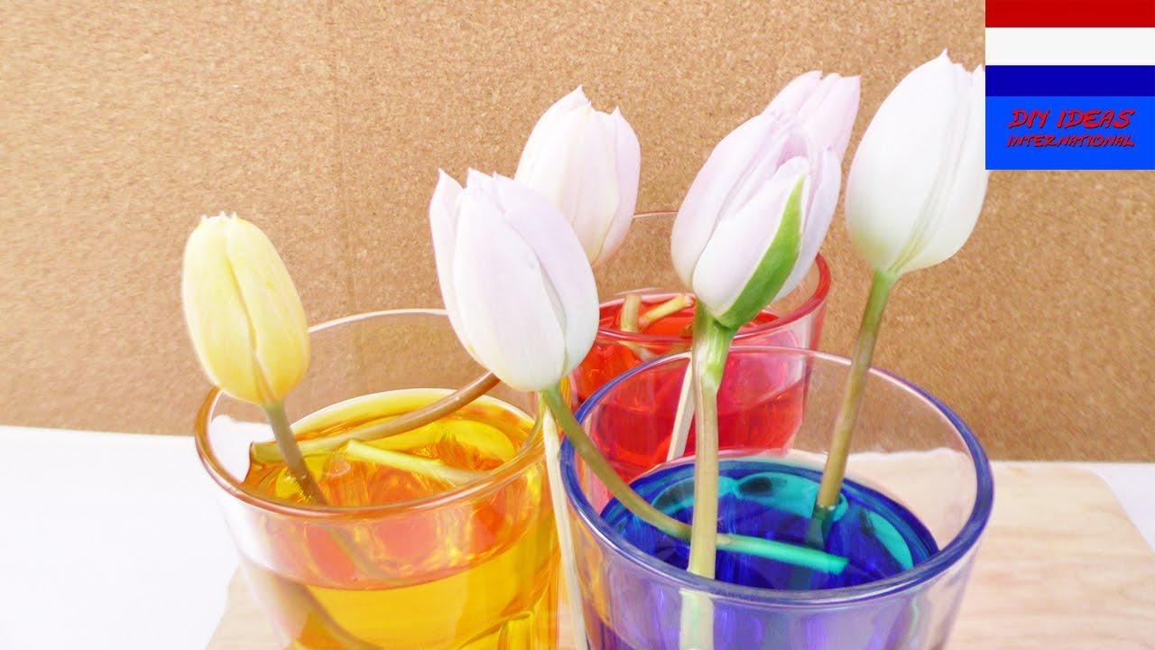 zelf bloemen verven tulpen kleuren met voedingskleurstof