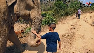 Boy Is Growing Up Rescuing Elephants | The Dodo