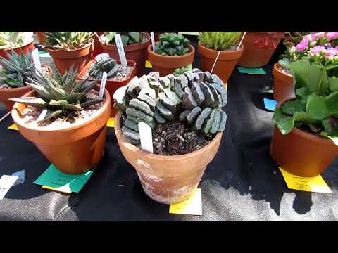 The Dublin & District Ireland Cactus & Succulent Show June 2018