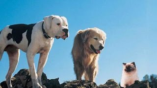 Homeward Bound The Incredible Journey 1993 Movie