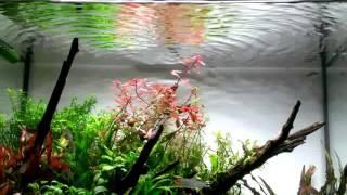 Tôi thấy hoa vàng trên cỏ xanh - harmonica - baotan267