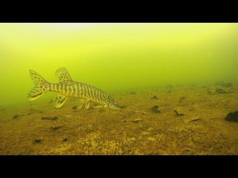 клев рыбы белоозерск