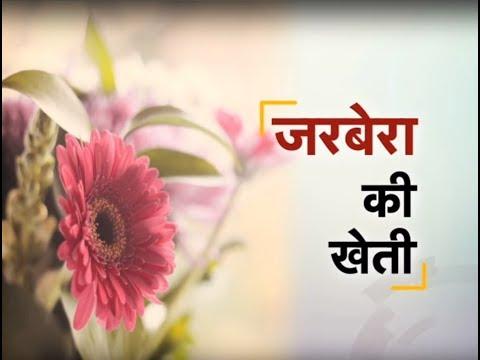 Krishi Darshan Gerbera Flower Farming Special Youtube
