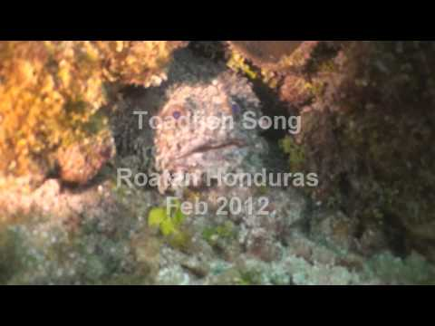 Toadfish Song